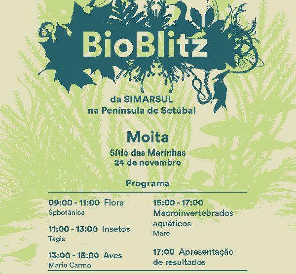 Bioblitz SimarSul Moita