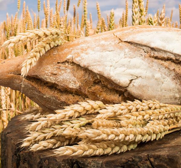 Da semente ao pão