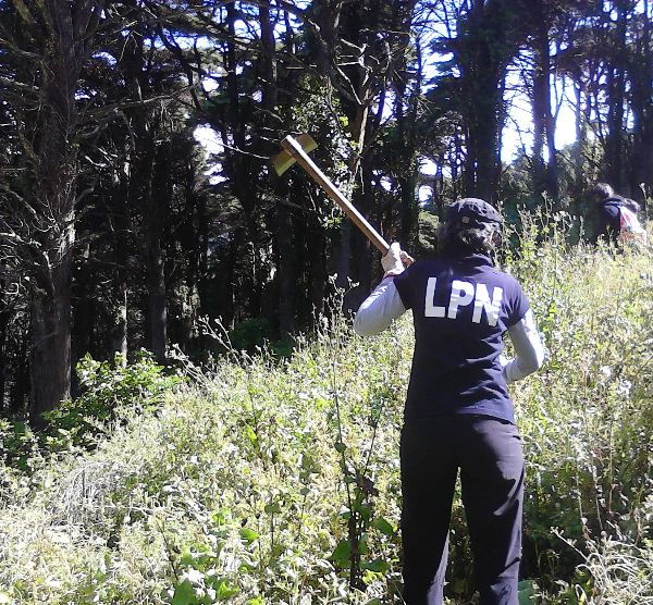 Remoção de plantas exóticas invasoras na Lagoa de Óbidos