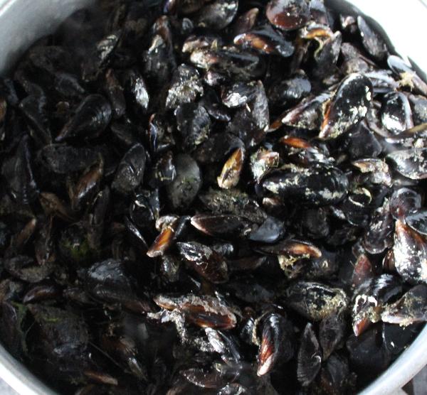 Intoxicações alimentares por consumo de bivalves