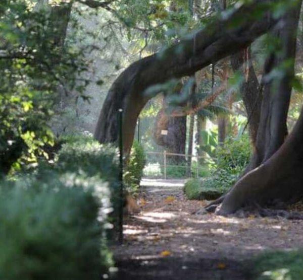 Jardim Botânico de Lisboa e Museu Nacional de História Natural e da Ciência