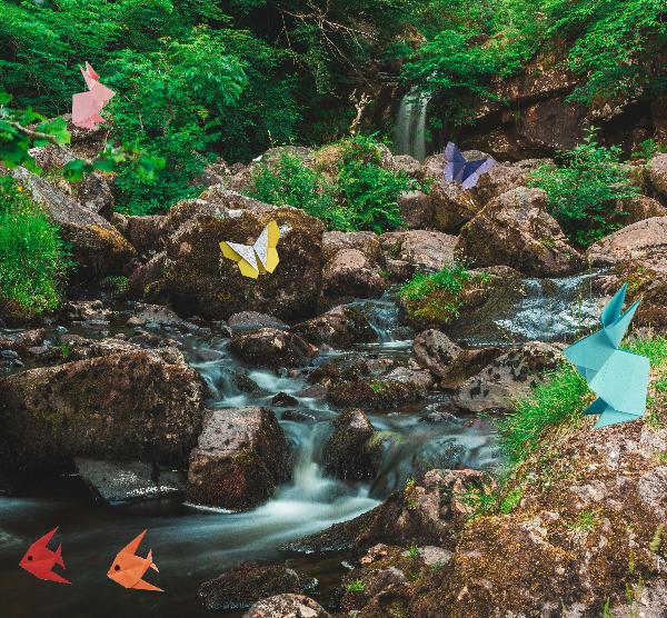 Descobrir a Biodiversidade criando Origamis