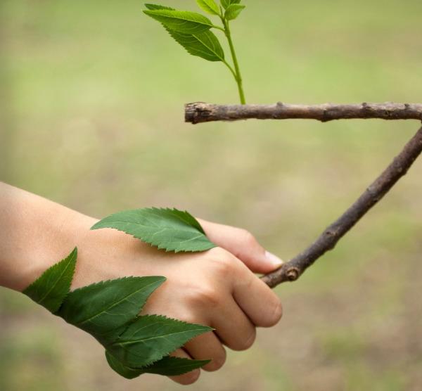 """Webinar """"Educação, Aprendizagem e Natureza – Cidadania em ação"""""""