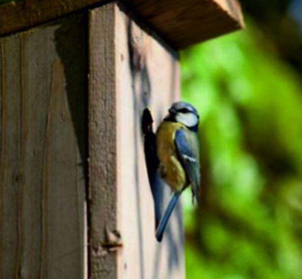 Caixas ninho para aves