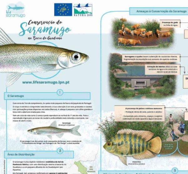 Folheto - Conservação do Saramugo na Bacia do Guadiana