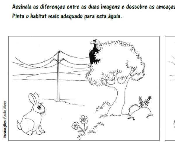 Assinala as diferenças entre as duas imagens e descobre as ameaças à Águia-imperial.