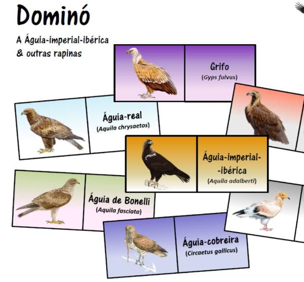 A Águia-imperial-ibérica & outras rapinas