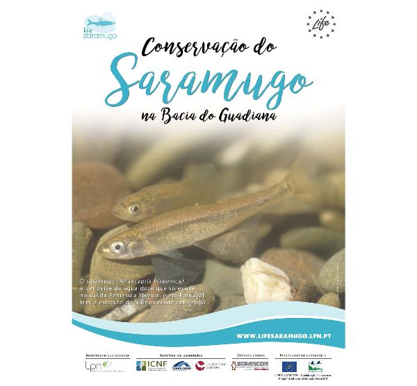Cartaz LIFE Saramugo - Conservação do Saramugo na Bacia do Guadiana