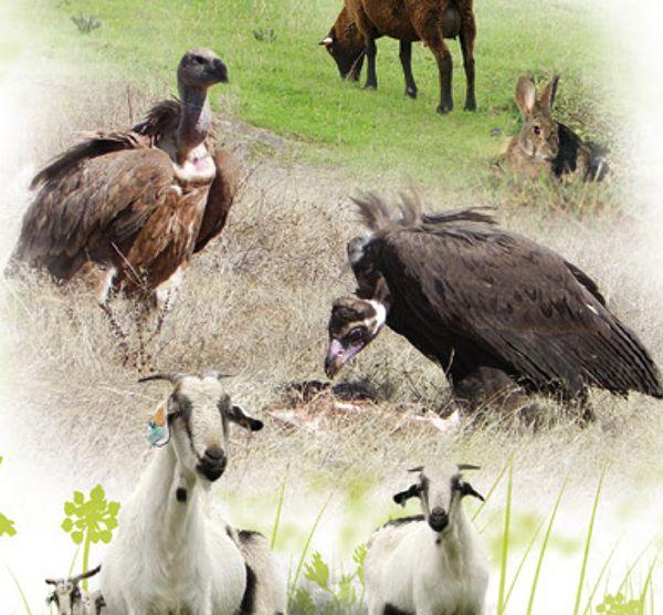Folheto LIFE Habitat Lince Abutre - Medidas de gestão e conservação da Natureza da Herdade da Contenda