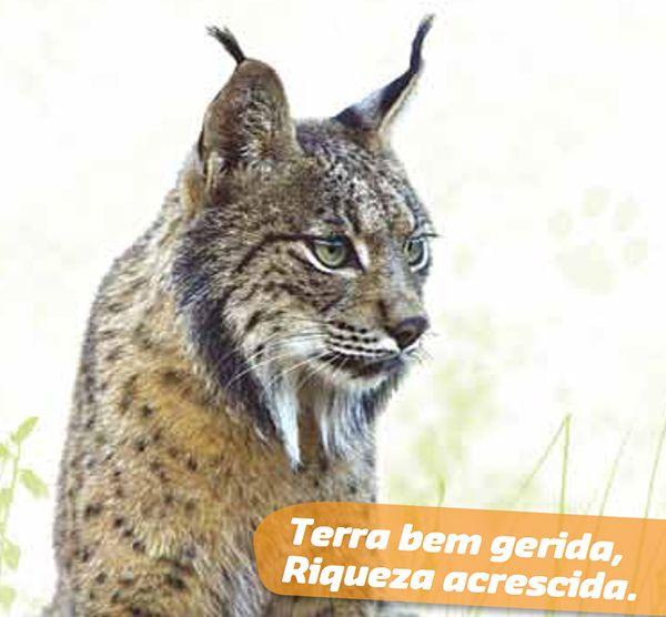 Folheto LIFE Habitat Lince Abutre - Lince-ibérico e Gestão Sustentável do Habitat Mediterrânico