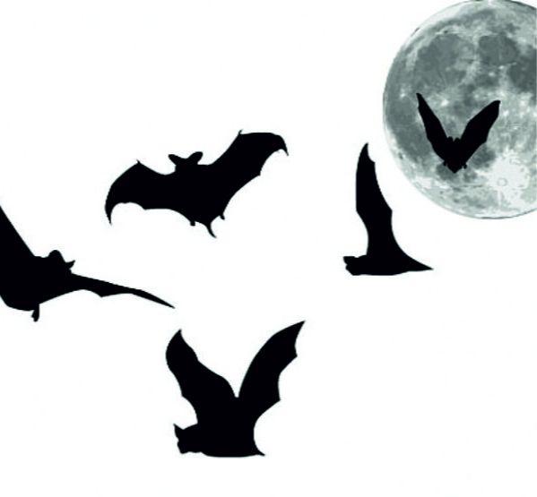 Caixa abrigo para morcegos