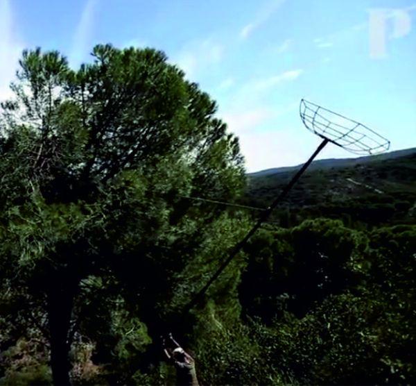 LIFE Habitat Lince Abutre constrói ninhos artificiais para abutre-preto
