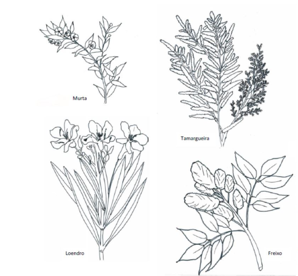 Habitat do saramugo - Flora