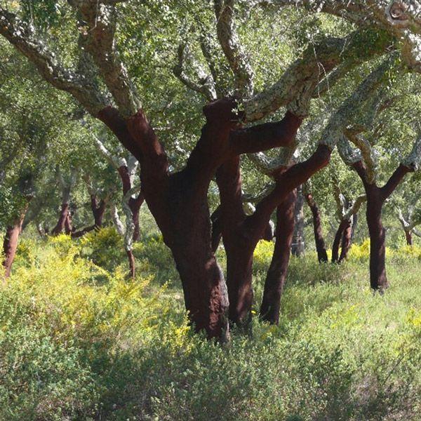 Norma FSC® de Gestão Florestal para Portugal (FSC-STD-PRT-01-2016)/1