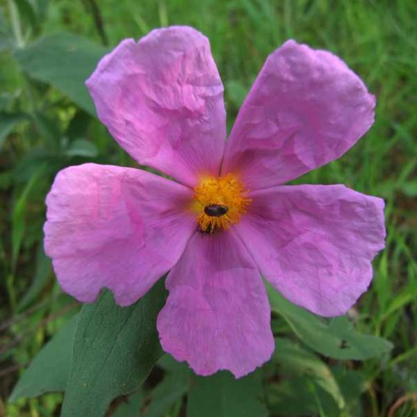 Introdução à Botânica e à Flora Mediterrânica