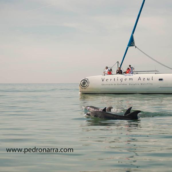 Navegando pela rota do património natural no estuário do Sado