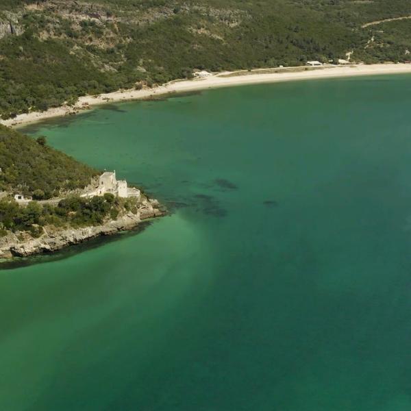 Áreas marinhas protegidas garantem maior diversidade, abundância e tamanho de peixes