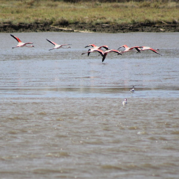 Organizações de ambiente levam Aeroporto do Montijo a tribunal