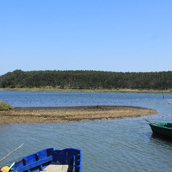 Lagoa de Óbidos, Voluntários precisam-se!