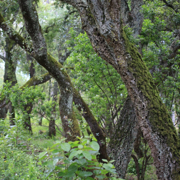 As más notícias do check-up à Natureza em Portugal e na Europa