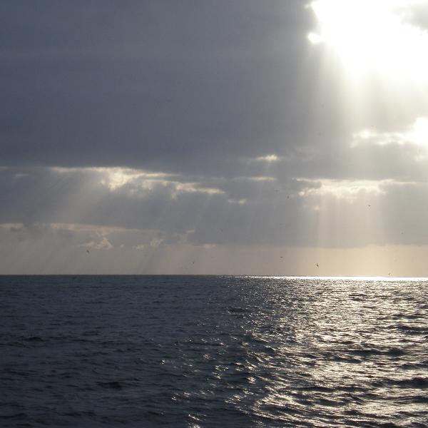 """PONG-Pesca assinala Dia Mundial dos Oceanos com atividade no Terreiro do Paço e lançamento da iniciativa """"Sábados do Carapau"""" no Arraial Composto, na Mouraria"""