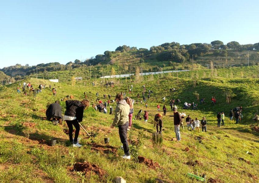 LPN parceira na plantação de 20.000 árvores em Lisboa