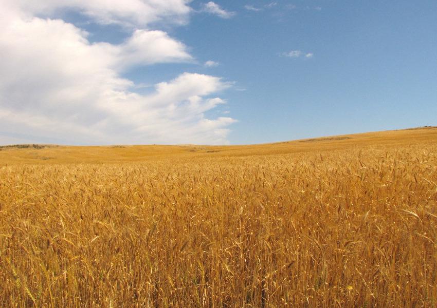 O Parlamento Europeu e os ministros da agricultura dos Estados Membros viram as costas à natureza com reviravolta na reforma da Política Agrícola Comum