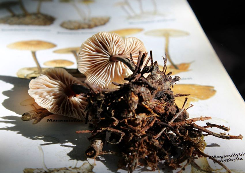 Os cogumelos do Parque Florestal de Monsanto