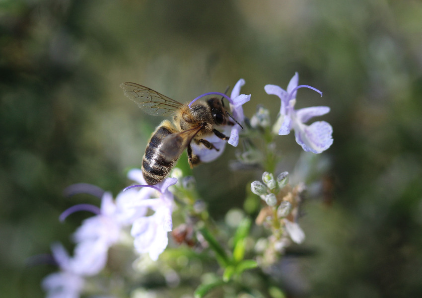 Sign the Iniciative Save Bees and Farmers