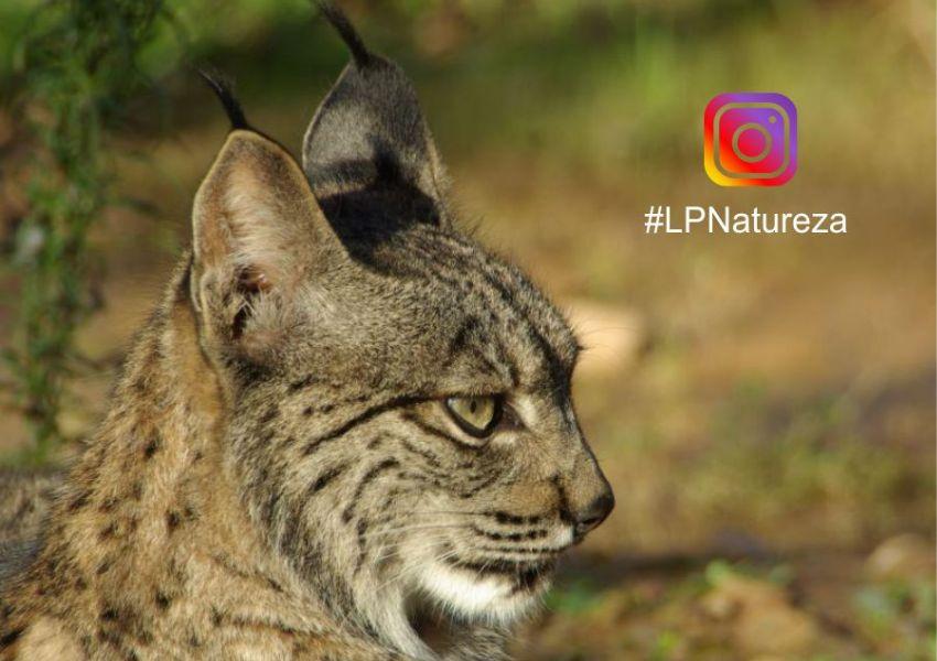 A LPN estreou-se no Instagram!