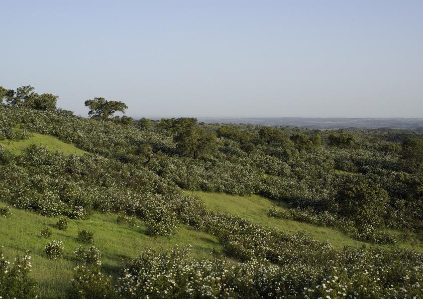 Caça & Natureza: seis propostas de ONGAs para o Conselho Nacional da Caça e da Conservação da Fauna