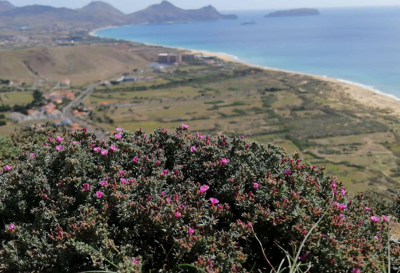 Capa-Vista do Miradouro das Flores. Fotografia de Clarisse Ferreira.