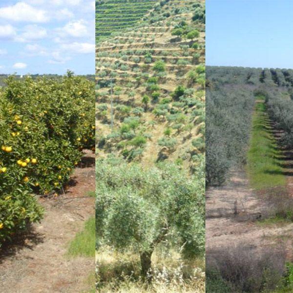 Biodiversidade na Agricultura