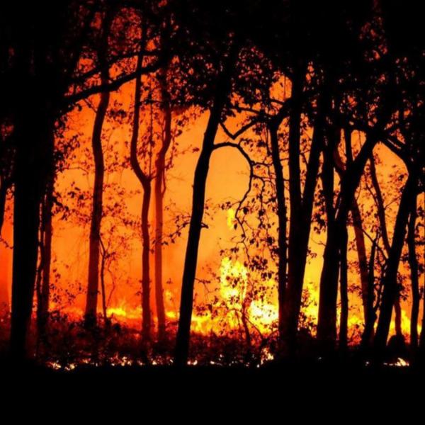 Detetar um foco de incêndio florestal