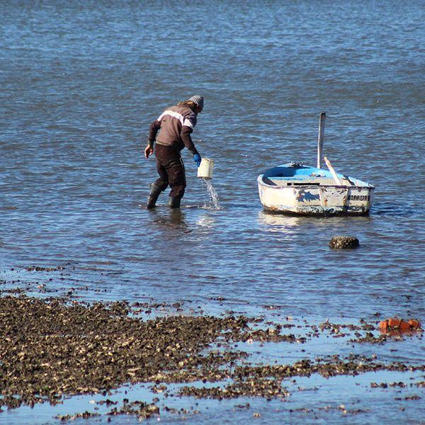 Ecofilm_Shellfishing