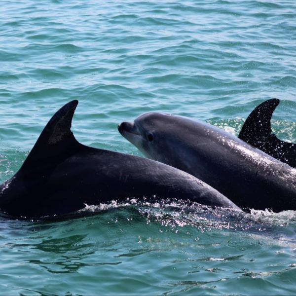 Animal marinho arrojado