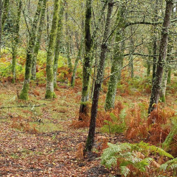 Literacia para a Preservação da Floresta