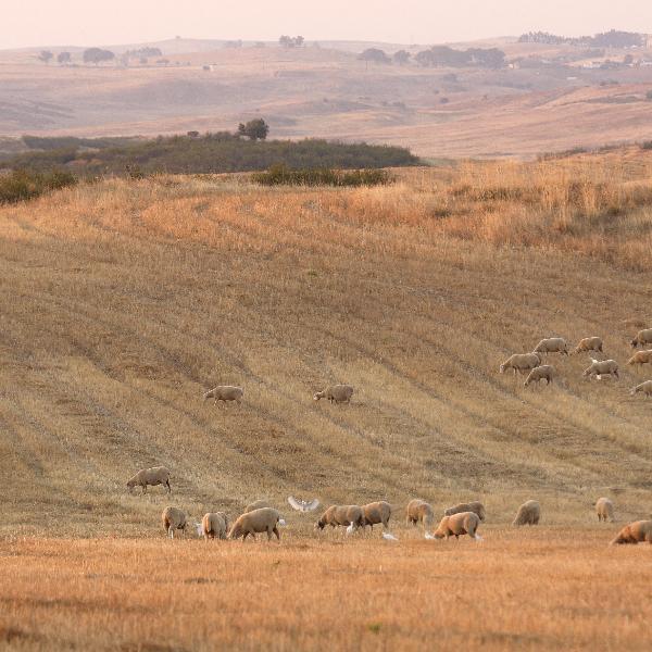 PRACTICE - Ações de Recuperação e Prevenção para Combater a Desertificação