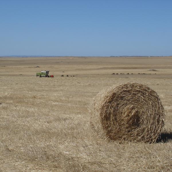 Projeto Rural Value